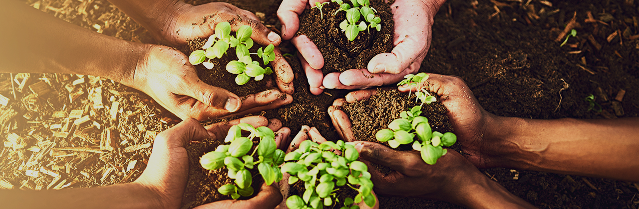 Going Green: Four Ways to Embrace Sustainability to Your Marketing